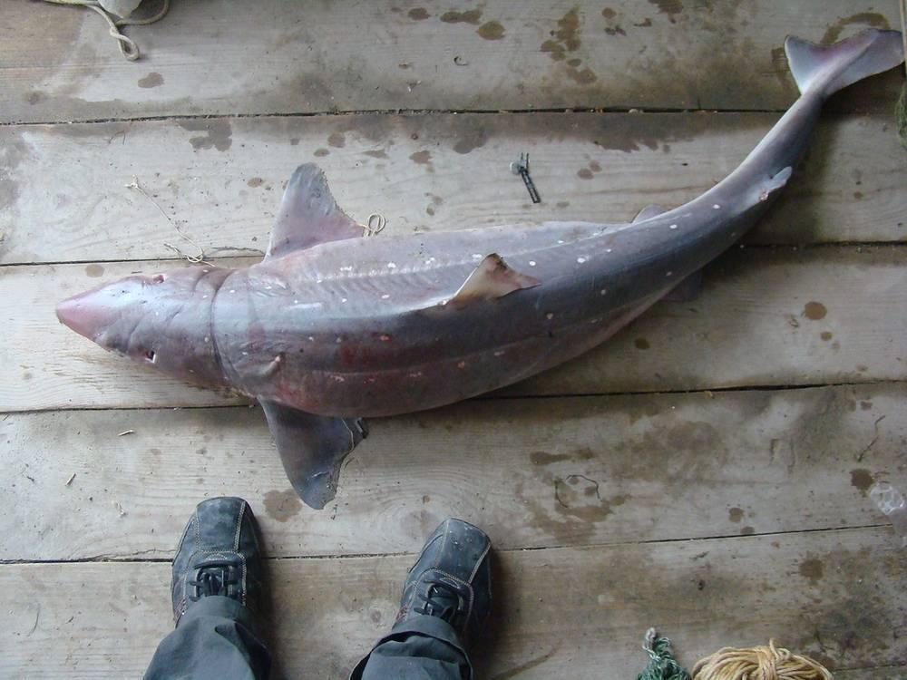 Как ловят рыбу в азовском море, и что с ним происходит (видео)
