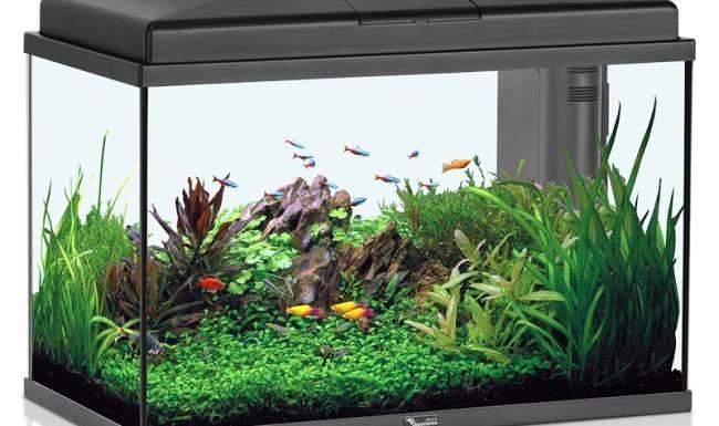 Искусственный аквариум: виды и применение