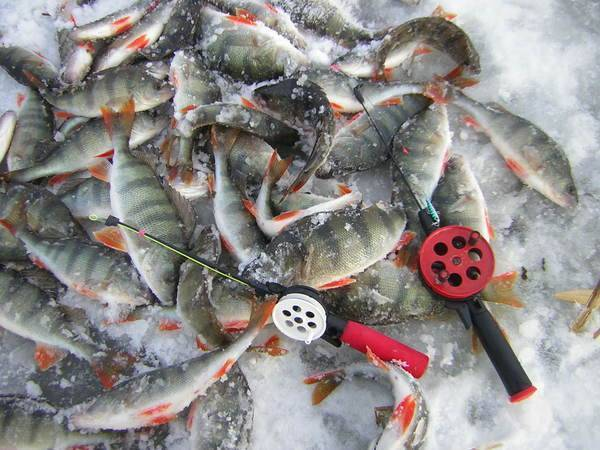 Рыбалка в кургане и курганской области (песчаное, пуктыш, сафакулево): где лучше клюет, отзывы