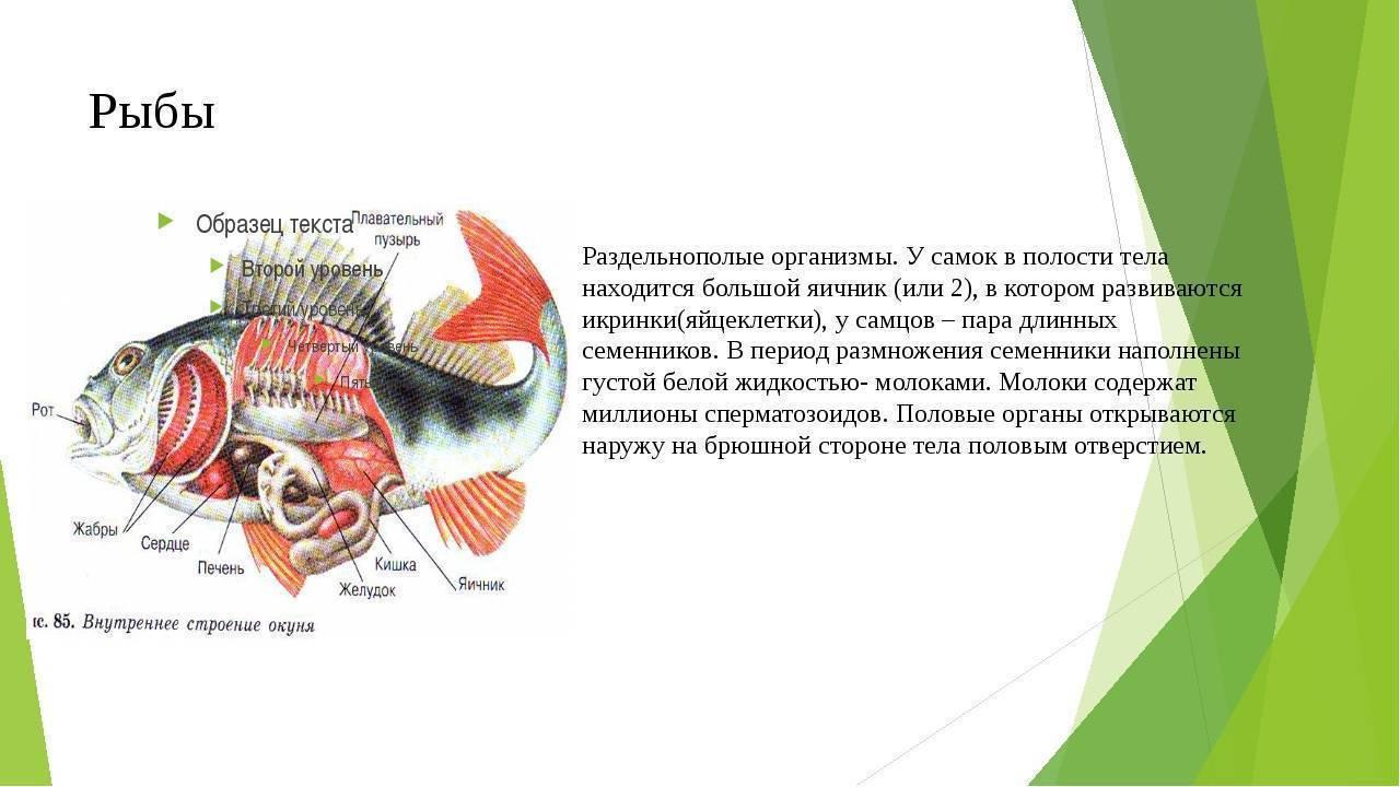 Как размножаются рыбы