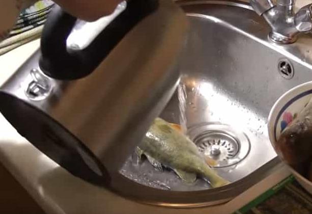 Надо ли чистить морского окуня от чешуи. как быстро чистить морского окуня от чешуи