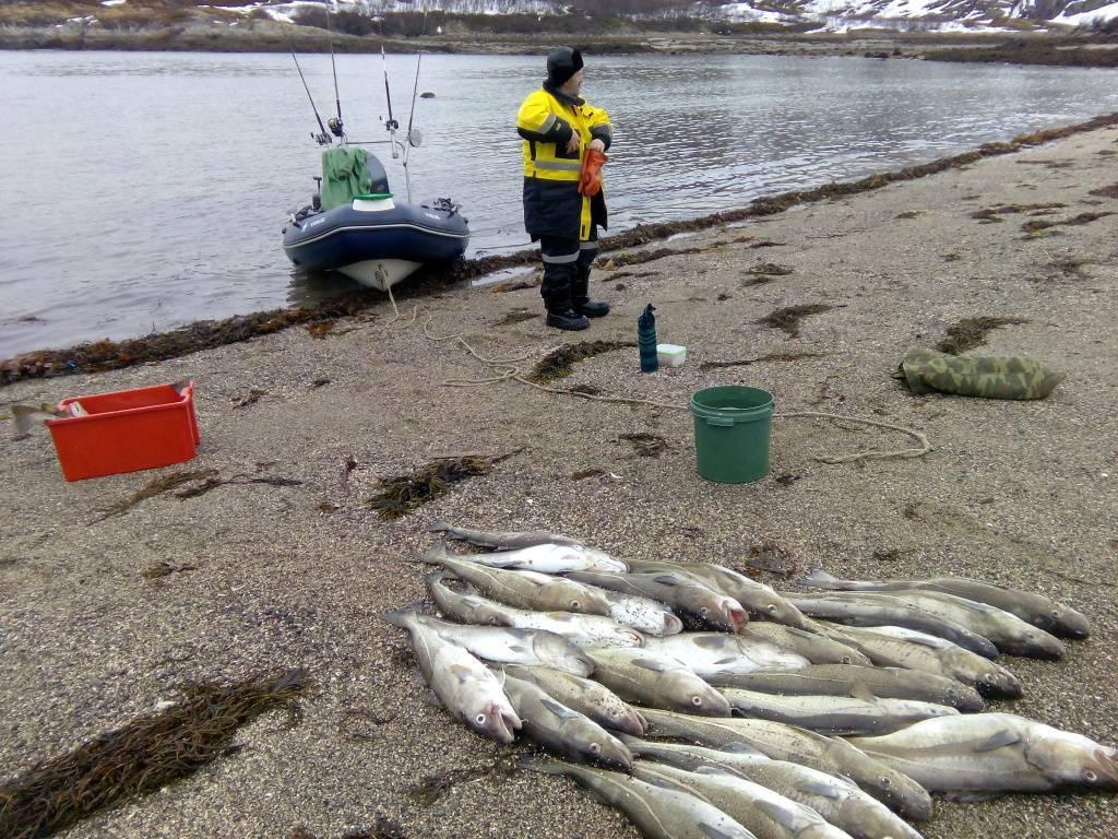 Стоимость                     | рыбалка в баренцевом море – ловля трески, камбалы, палтуса!