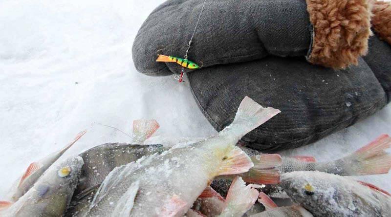 Секреты ловли и клев рыбы в глухозимье - читайте на сatcher.fish