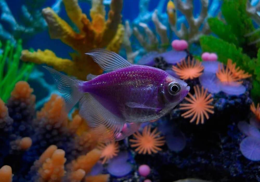 Виды аквариумных рыбок: 150 фото названия, описание, уход и правила содержания