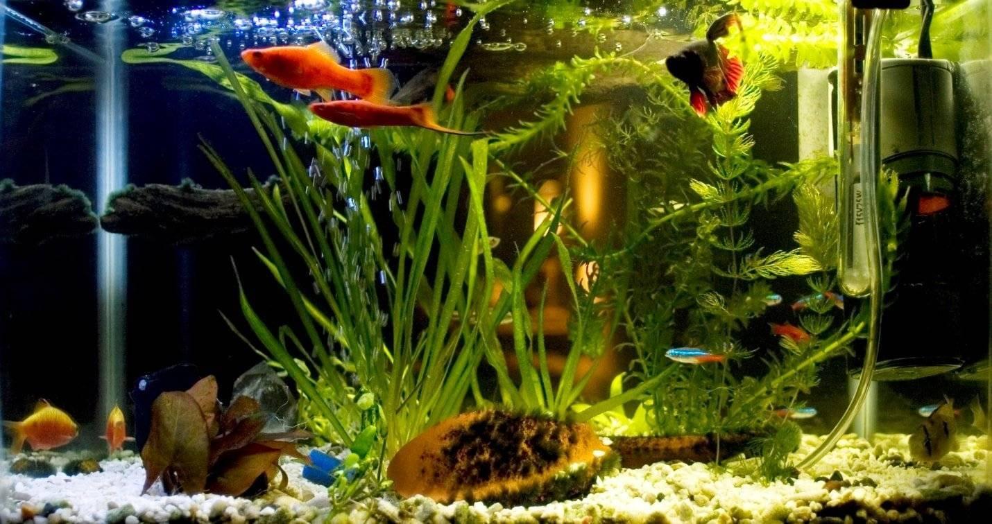 Как размножаются аквариумные рыбки