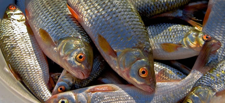 Вяленая рыба: в чем польза и в чем вред   польза и вред