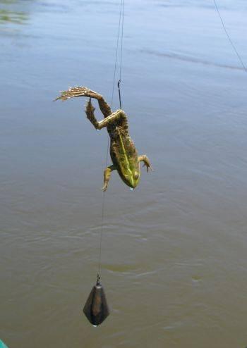 Искусственная лягушка незацепляйка на сома