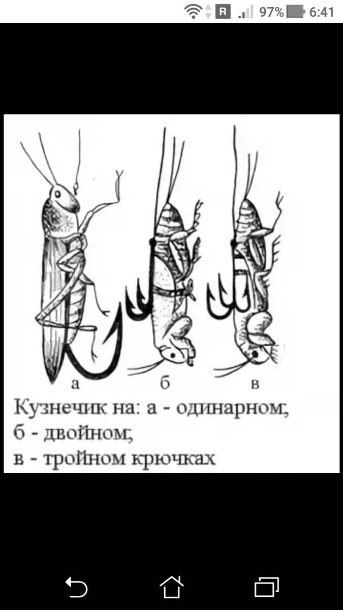 Ловля голавля на донку: снасти, приманка и техника