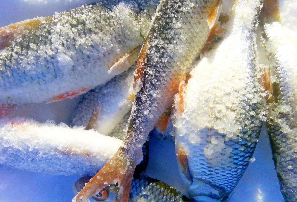 Ловля щуки осенью: премудрости рыбалки по холодной воде