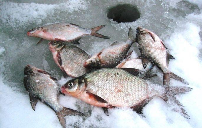 Особенности зимней рыбалки на леща: выбор оснастки и приманки