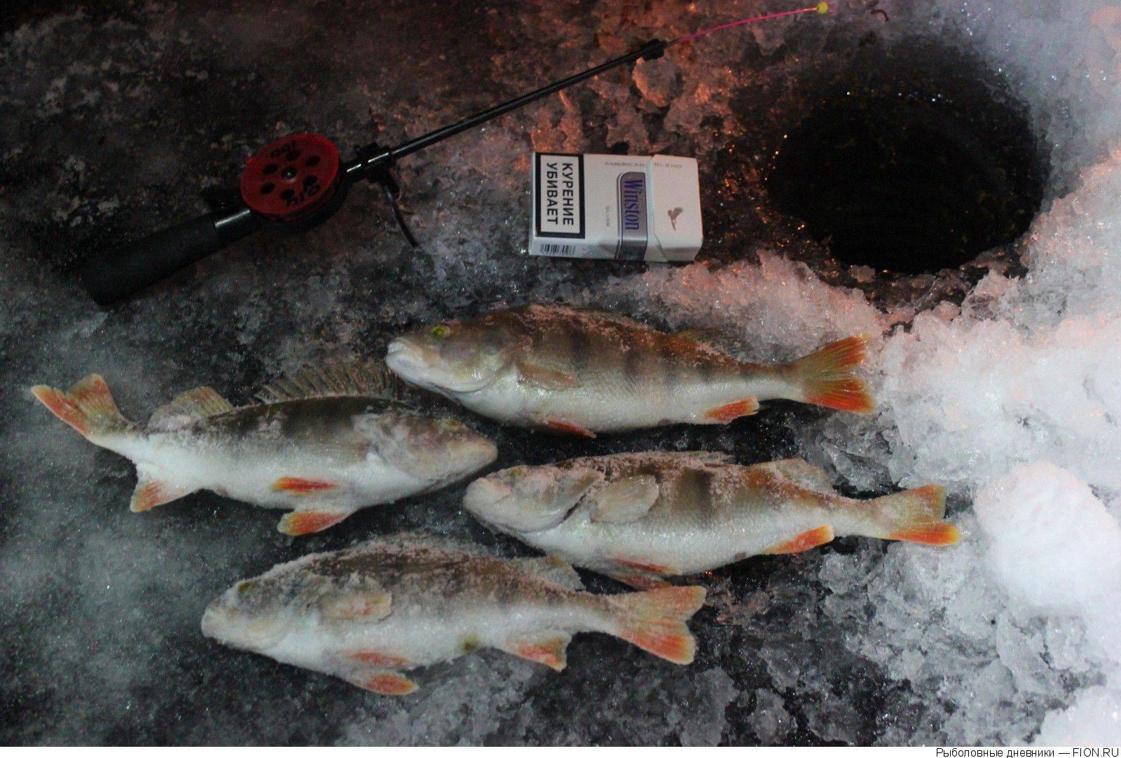 Лучшие рыболовные места омской области – рыбалке.нет