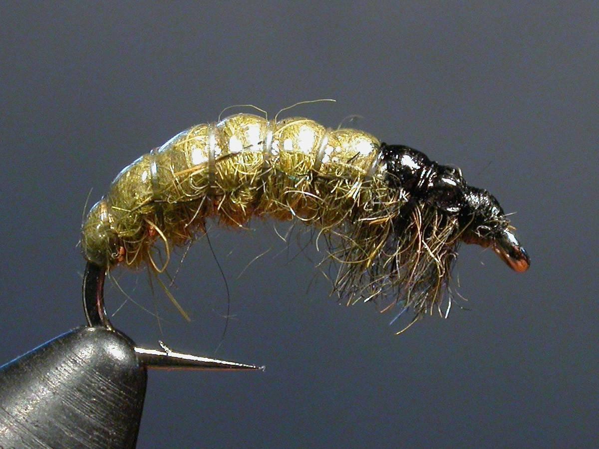Поденка и ее личинки, фото, особенности размножения и рыбной ловли на такую приманку