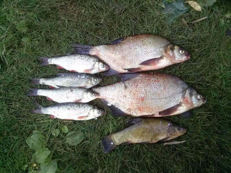 Рыбалка на озере плещеево: как ловить летом с берега, какая рыба водится