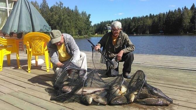 Платная рыбалка в подмосковье — хомяково