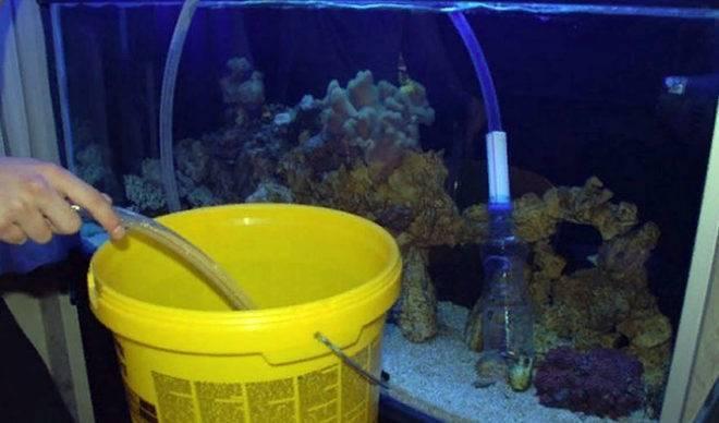 Подготовка воды для аквариума: сколько нужно отстаивать воду и как правильно это делать