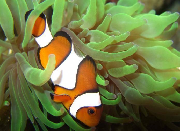 Как спят рыбы. спят ли рыбы в аквариуме ночью