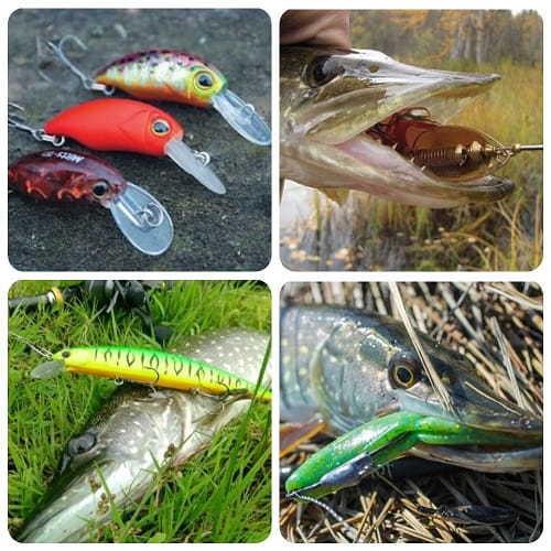 Как ловить щуку в сентябре? Как и на что ловить щуку осенью