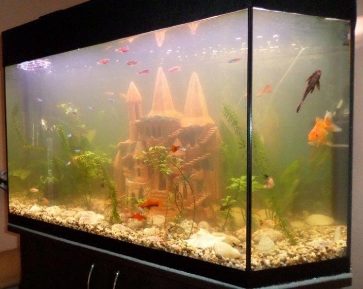 Как почистить аквариум в домашних условиях ?