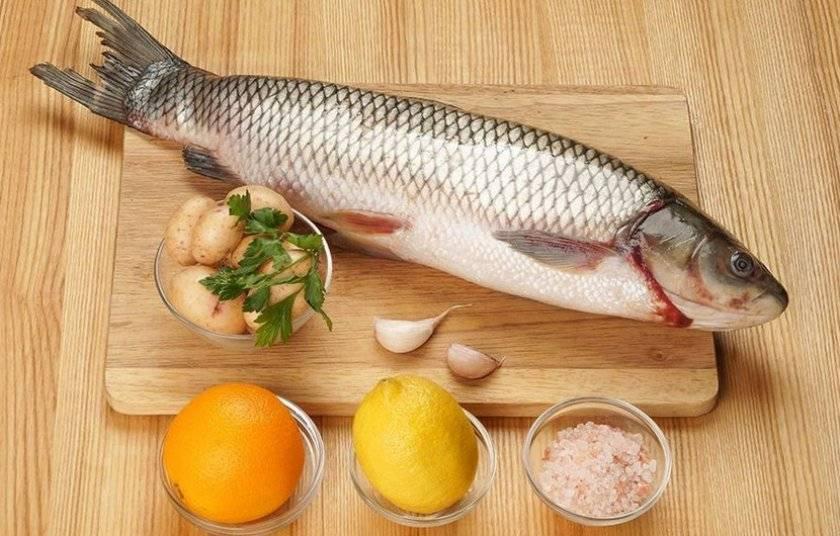 Польза и вред карпа для организма человека : обзор минералов, свойств и веществ в мясе карповых рыб (130 фото и видео)