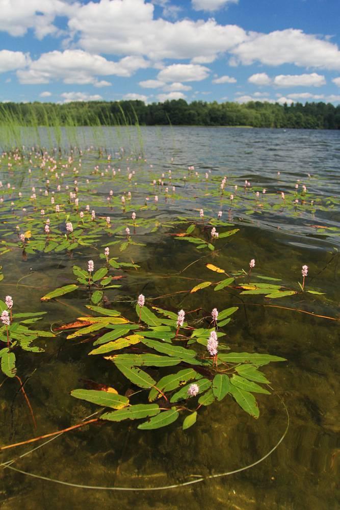 Горовалдайское (шепелевское) озеро
