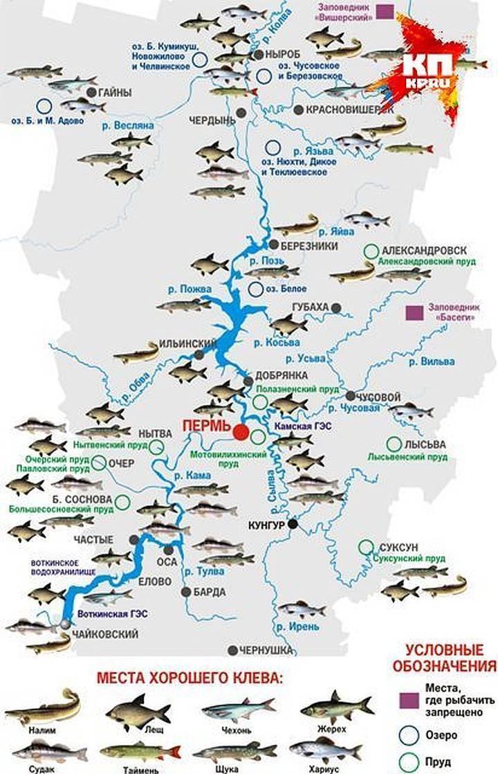 Река медведица тверской области: карта рыбных мест, особенности рыбалки, какая рыба водится