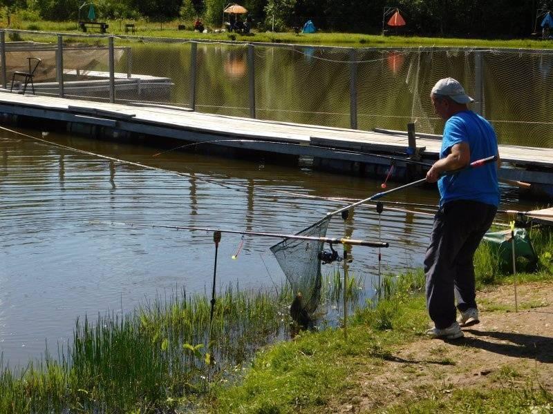 Cтрелецкий ручей рыбалка – обзор