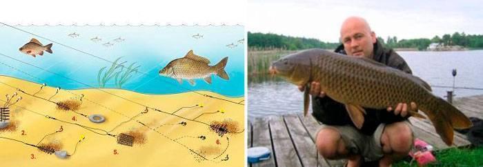 Ловля рыбы на картошку – рецепты насадок и приманок