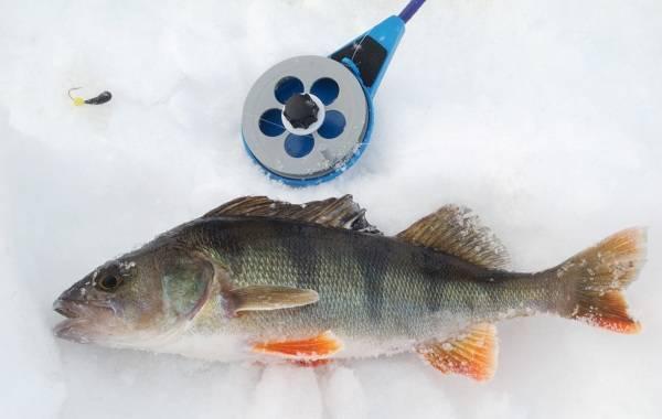 Ловля окуня зимой на мормышку - рыбачок!сайт рыбачок