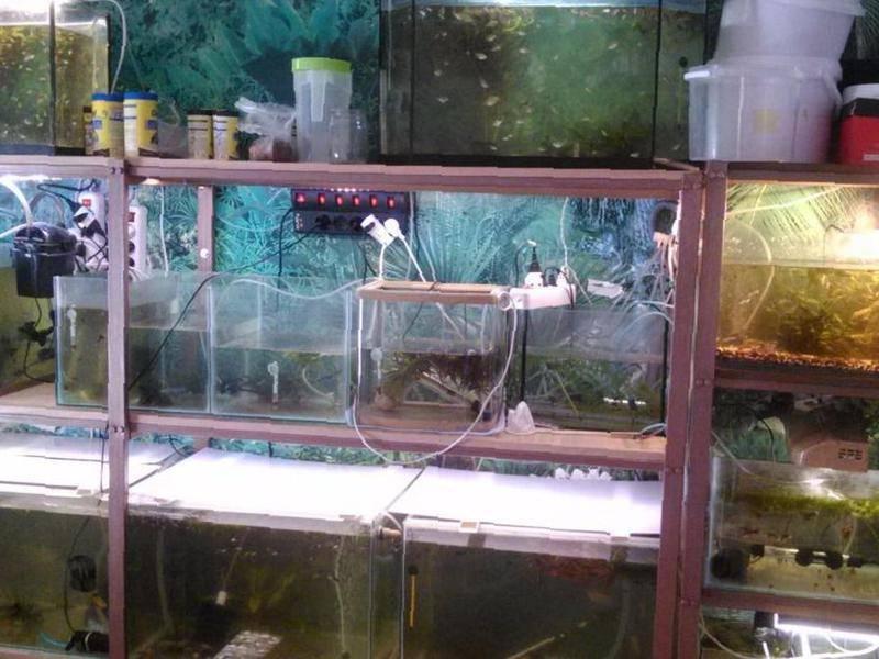 Аквариумные рыбки:содержание, уход для начинающих