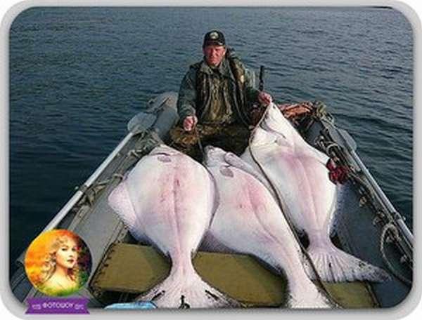 Рыбалка на реке сейм в курской области