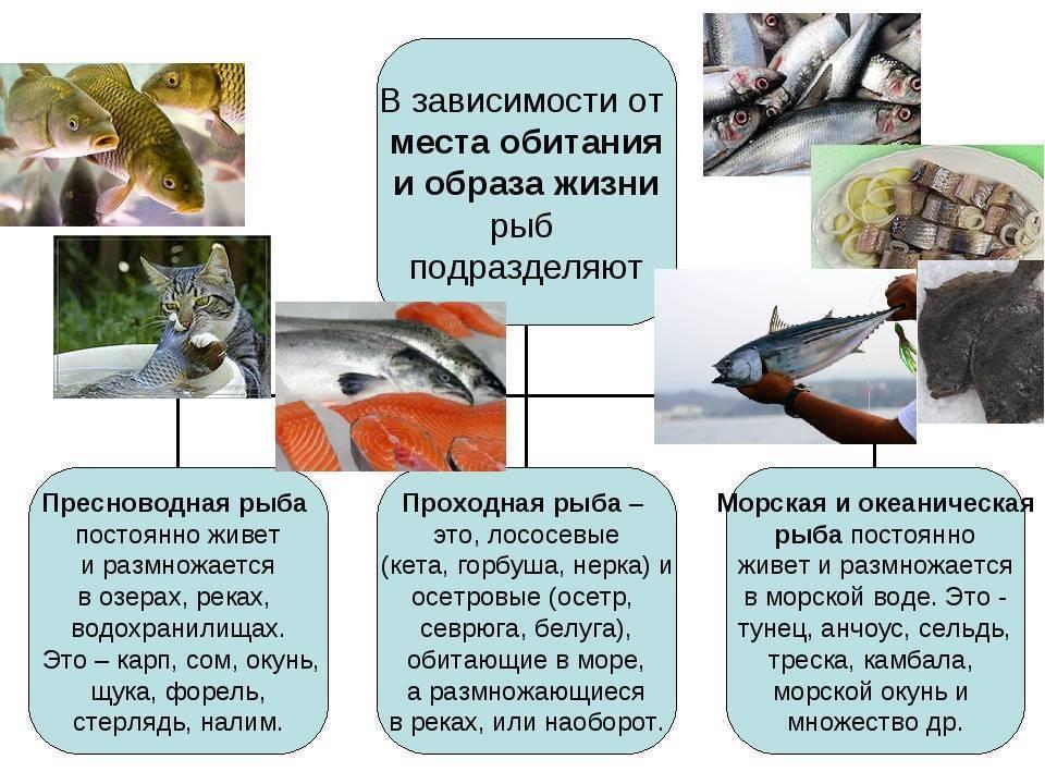 Рыба карась: описание вида, места обитания и особенности ловли