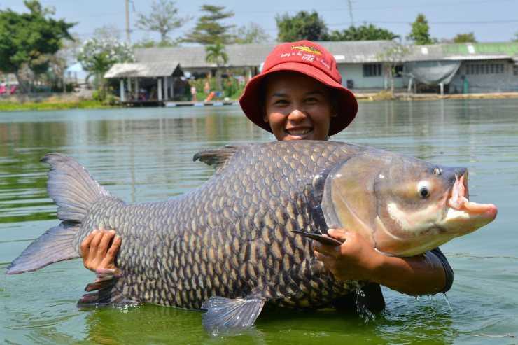 Польза хека: 120 фото и видео выбора и правильного приготовления рыбы