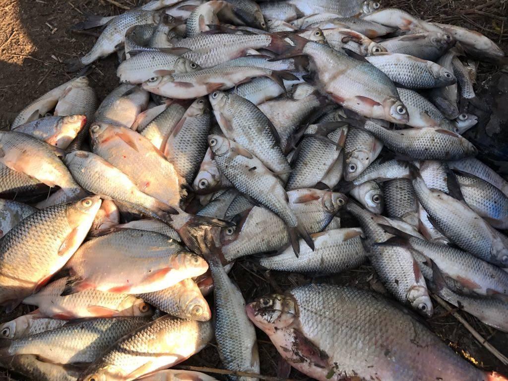 Рыбалка в астрахани и астраханской области 2020 | базы отдыха, запрет, реки, дикарем, на волге