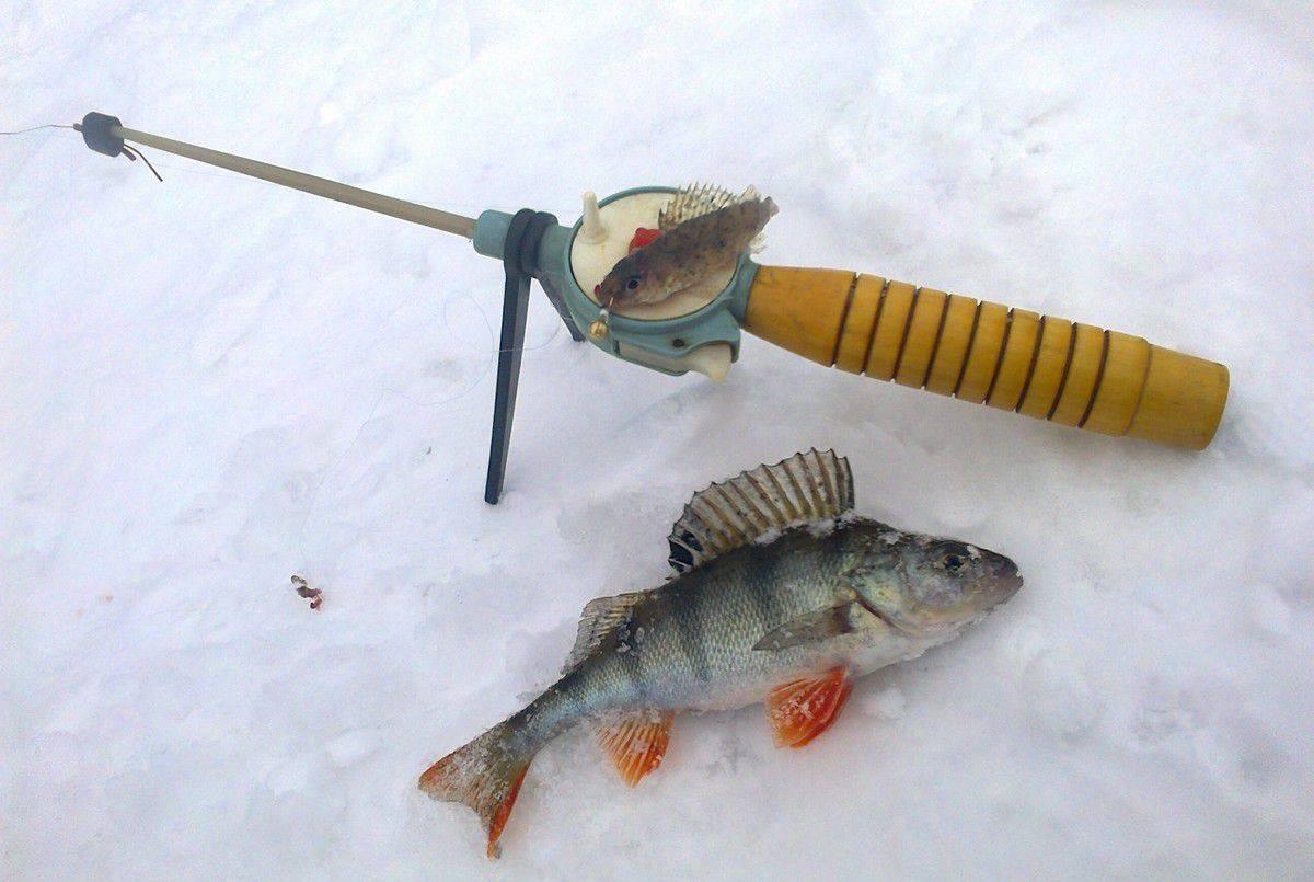 Ловля ерша зимой на мормышку