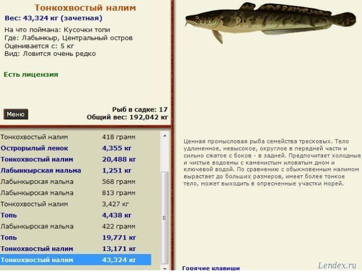 Налим рыба – что такое, чем питается, как выглядит и где обитает
