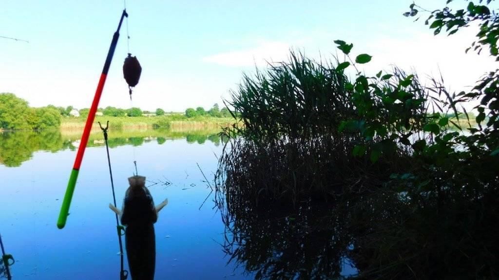 Как ловить карпа: наживки и снасти на круглый год