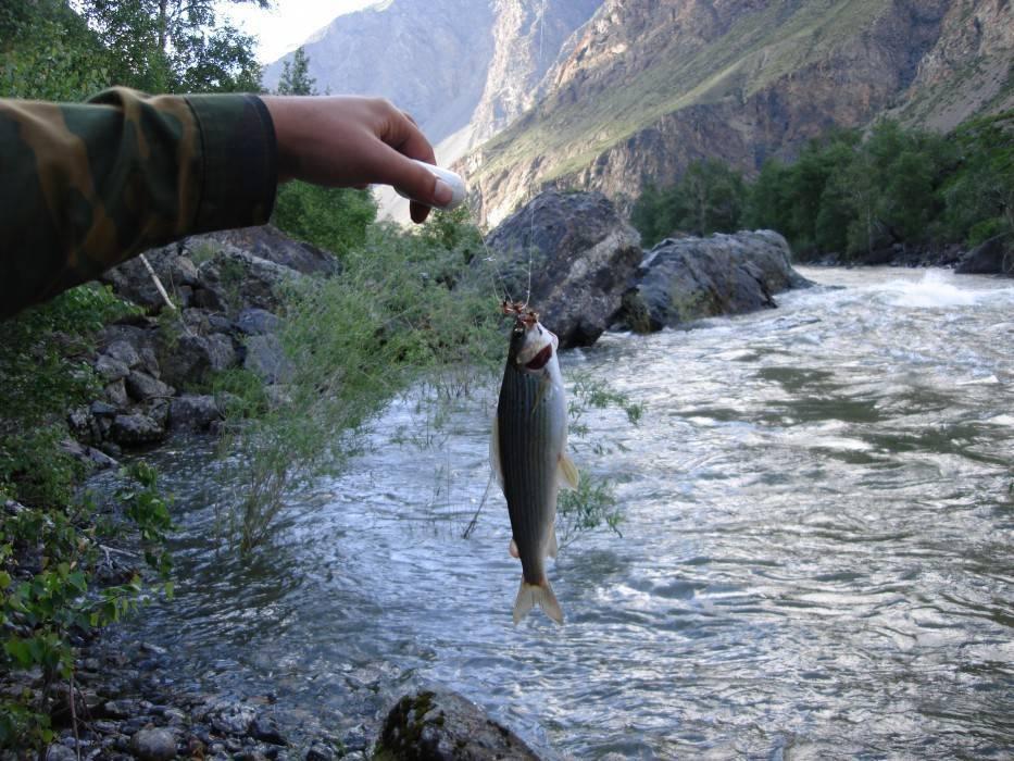 Firstfisher.ru – интернет-журнал о рыбалке и рыболовах. рыбалка в горном алтае