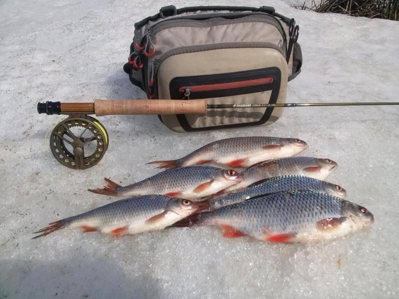 Ловля на мушку: 130 фото и видео описание особенностей ловли и настройки снастей