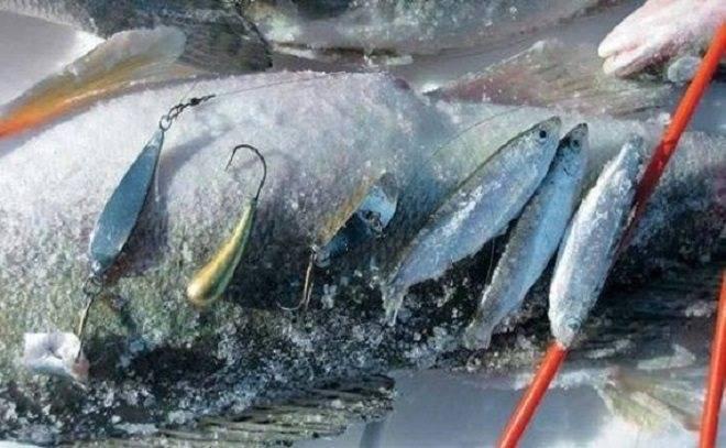 Бокоплав для зимней рыбалки: особенности изготовления приманки для окуня и судака