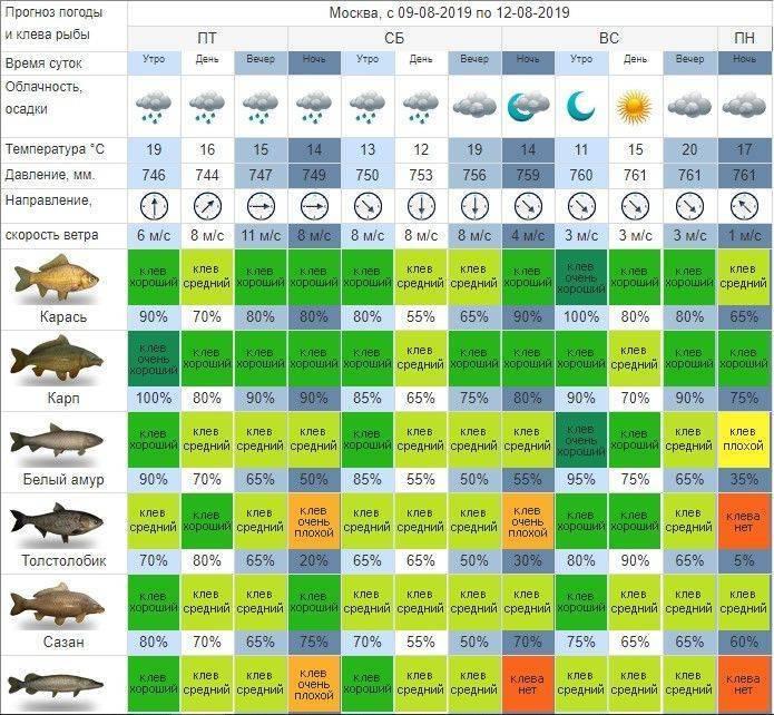 Влияние погоды на рыбалку: направление ветра и температура, прогноз клёва, особенности поведения рыбы зимой