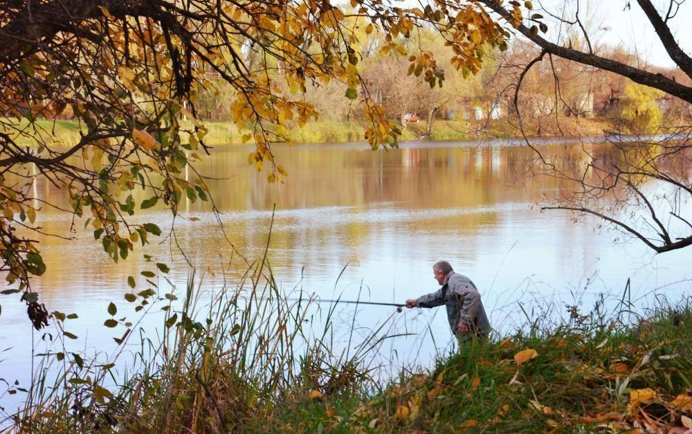 Ловля карася осенью на поплавочную удочку: секреты, на что клюют крупные особи