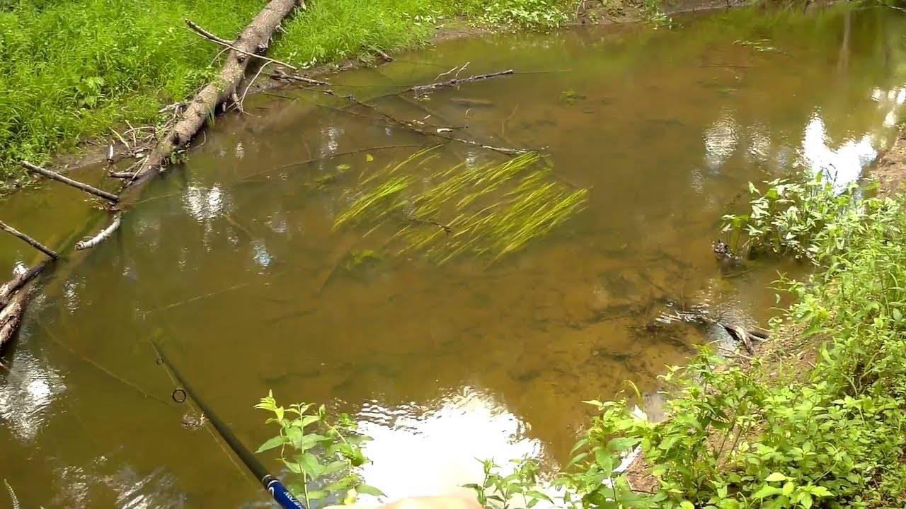 Где обитает щука: поиск на водоеме, повадки, влияние погоды на клев. места обитания щуки, в каких водоемах она водится