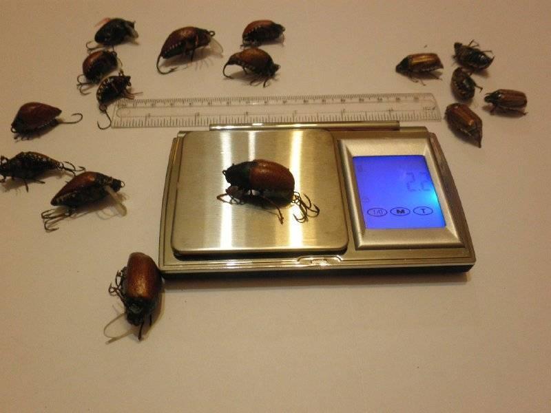 Как бороться с майским жуком: как избавить и уничтожить на участке и огороде