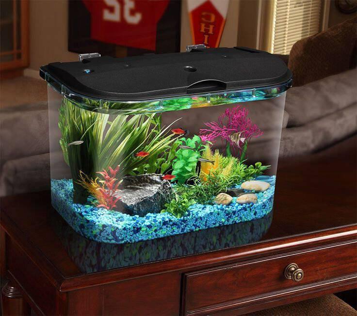 Круглый аквариум: все за и против » домашний аквариум