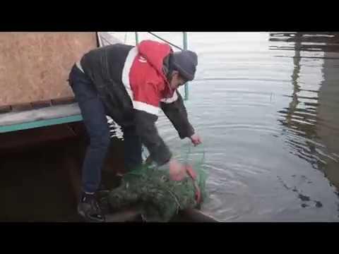 Рыбалка в удмуртии: ловля карпа и другой рыбы в глазове, в чужьялово и поваренках, пруды в удмуртии, рыбалка в гришанках и на каме