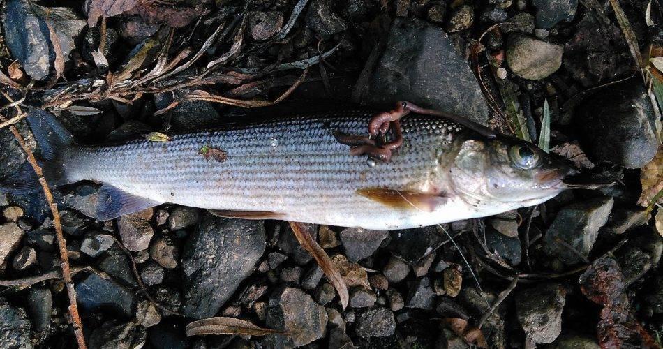Платная и бесплатная рыбалка в кемерово