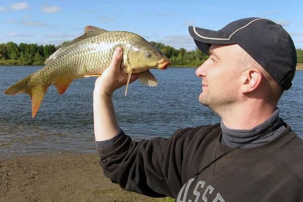 Рыбалка на сазана на ахтубе