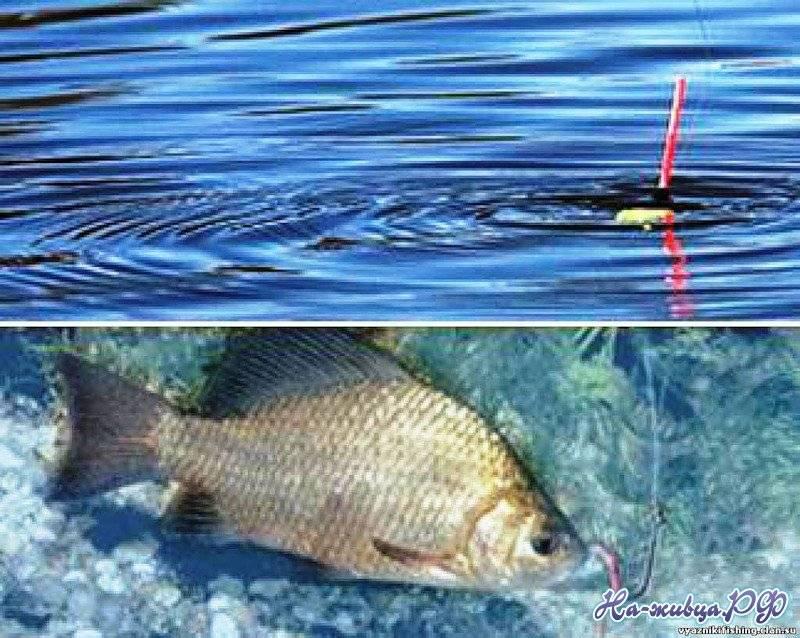 Рыба корюшка: где водится в россии, особенности среды обитания, нереста и жизненного цикла