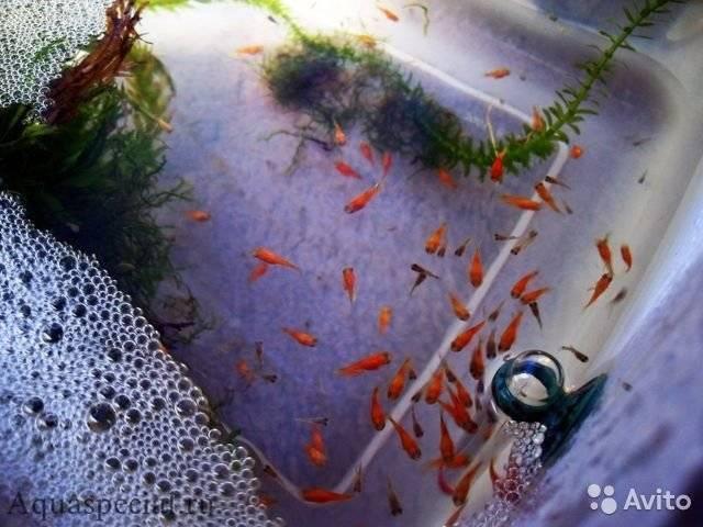 Чем кормить аквариумных рыбок? | виды кормов