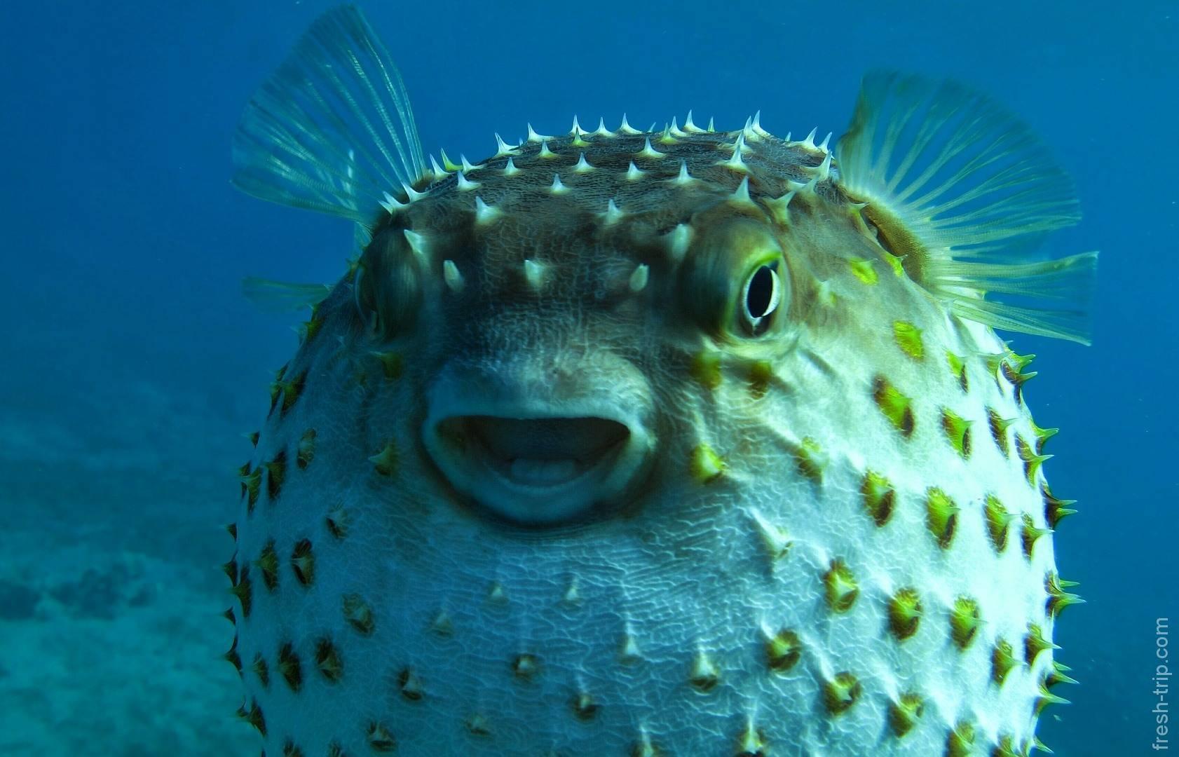 Уход и содержание рыб-петушков в домашних условиях